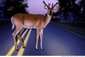 deer freeze